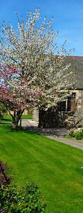 Spring trees outside the Methven Hall